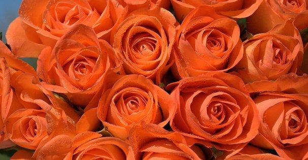 gift roses online