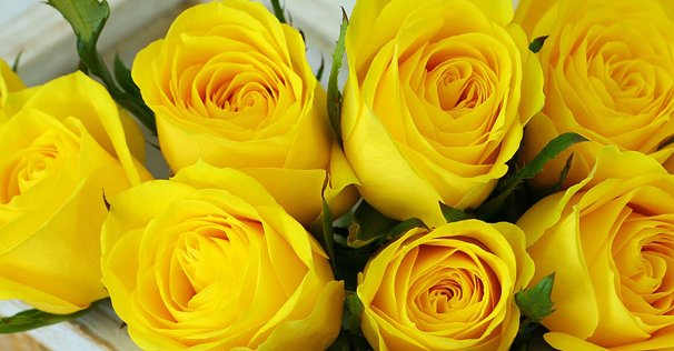 send yellow roses online