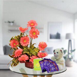 pink gerbera teddy and dairy milk chocolates